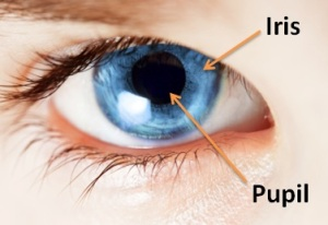 Eye Diagram for Iris and Pupil